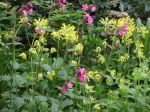 Red Campiom & Cowslips